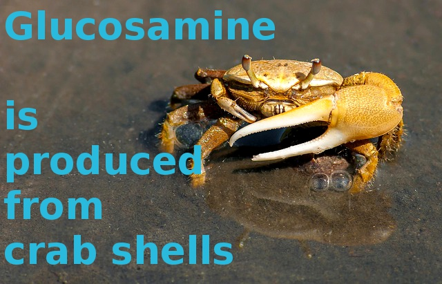 Glucosamine is usually produced from shells of crabs and lobsters.