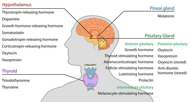 hormones_psoriasis