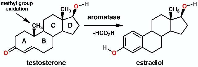 testosterone_to_estradiol_conversion