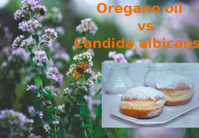 How Strong Oregano Oil Really Is in Fight Against the Candida albicans