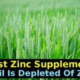 Zinc Depleted Soils And Psoriasis